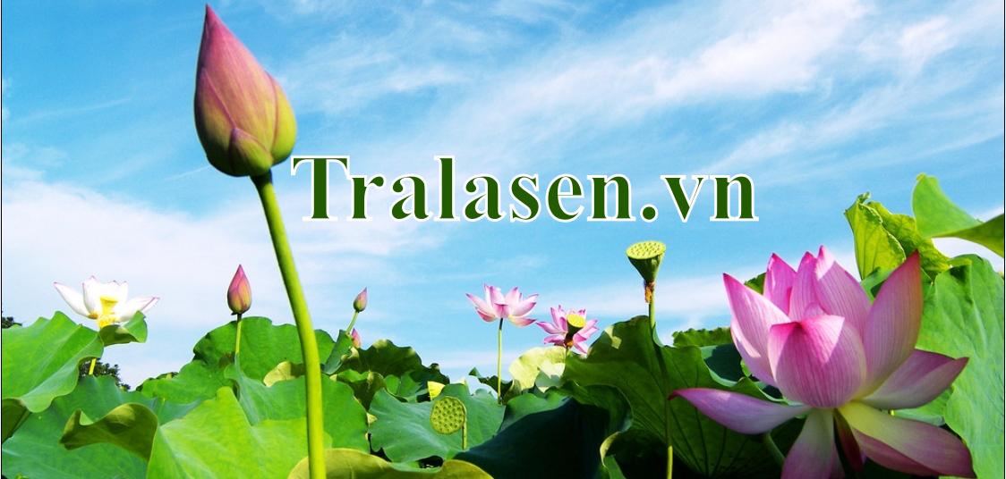 tralasen-vn-banner
